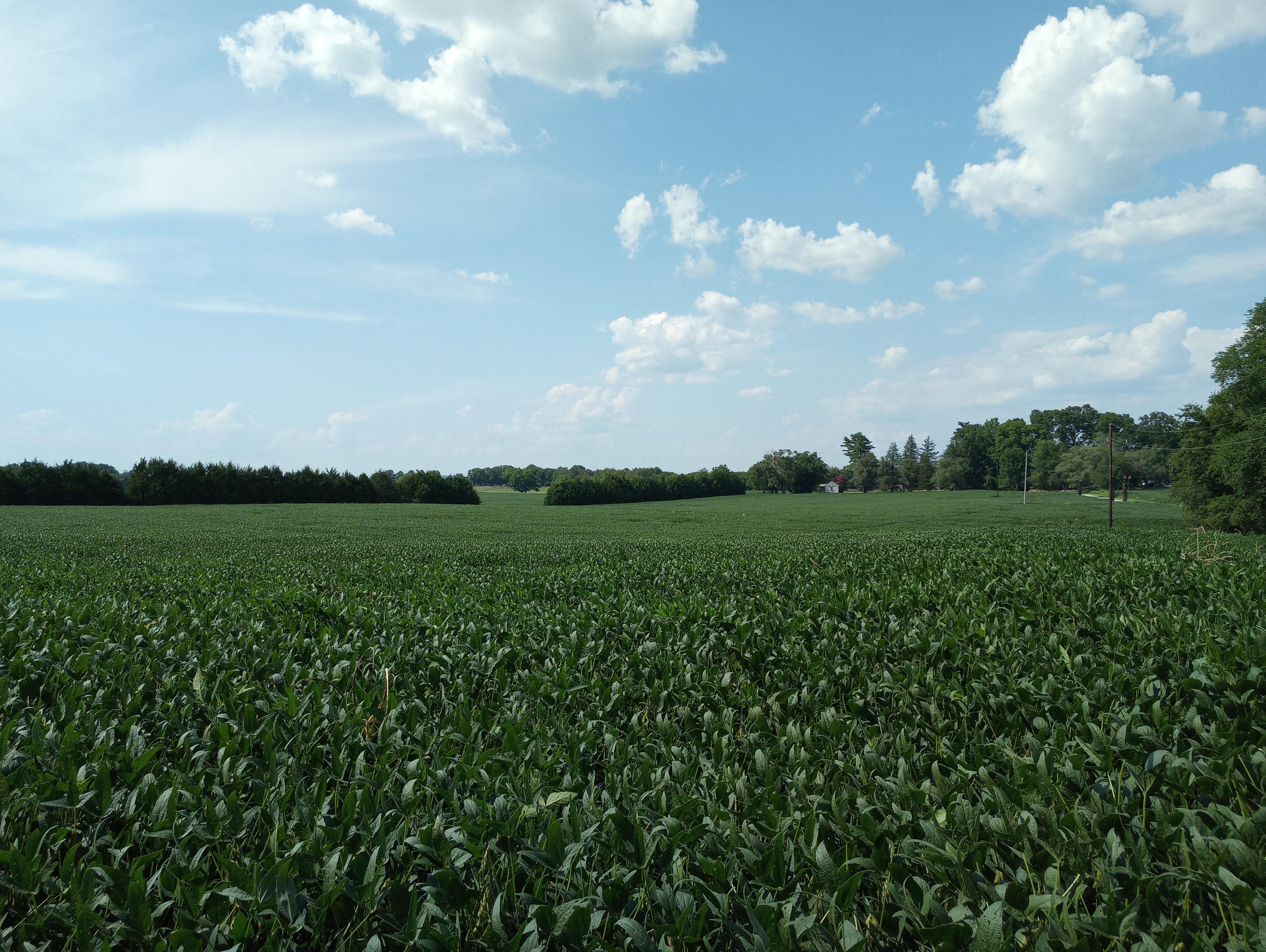 What will happen to the agricultural land in the path of the Mack Hatcher extension?