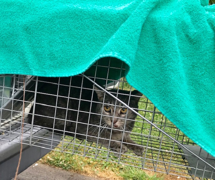 County's Animal Center nearing goal of spaying or neutering 1,000 cats