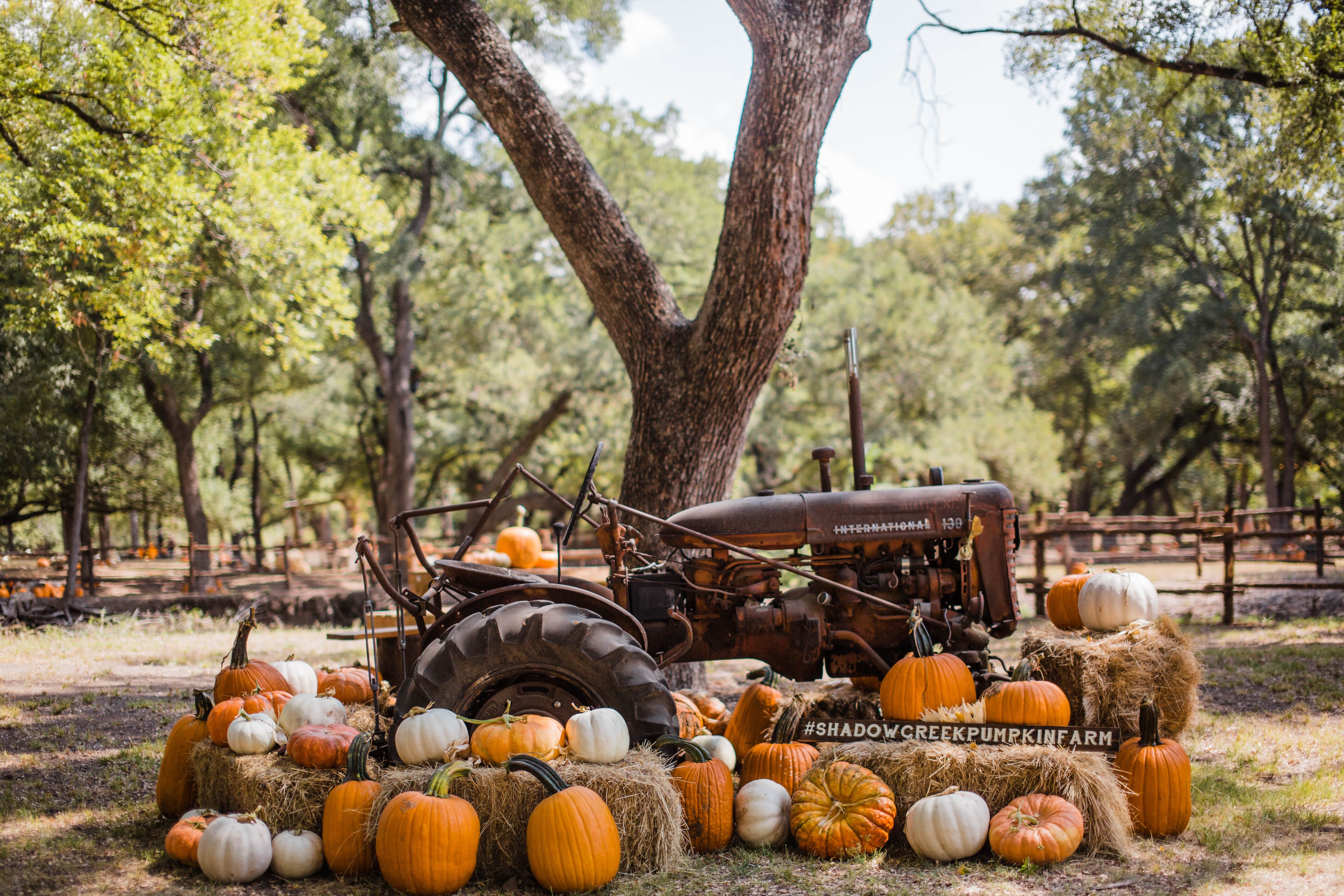 ROUNDUP: Harvest fest, live music and more to keep you busy this weekend in Spring Hill